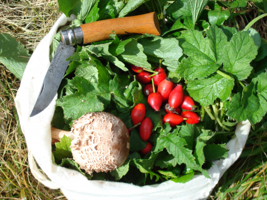 Champignons, Baies et Racines Comestibles
