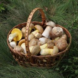 Initiation champignons