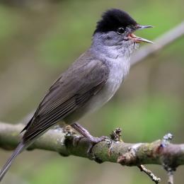 Journée d'initiation aux chants d'oiseaux